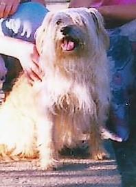 Psy Hodowla